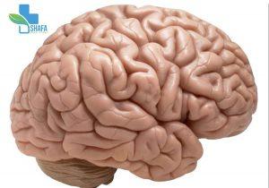 زوال-مغز